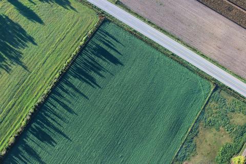 Devoir de vigilance : le secteur agroalimentaire pointé du doigt pour son approvisionnement en soja