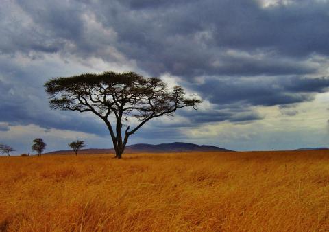 Pharmaciens Sans Frontières Suisse recherche un.e volontaire pour sa mission en Tanzanie!
