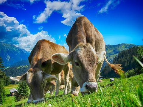 Pour une politique agricole de la qualité
