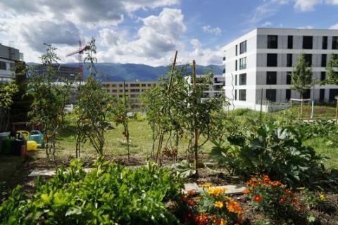 L'Ecoquartier des Vergers à Meyrin en pleine construction depuis 5 ans