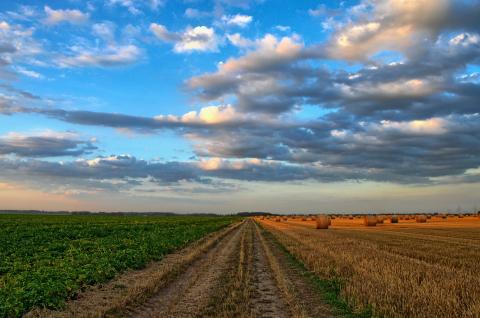 Une perte importante de la production mondiale de nourriture entre les producteurs et la consommation finale