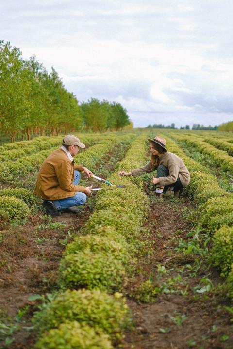 Les principes de la permaculture : 22 fondamentaux pour vivre autrement - Article de PositiVR