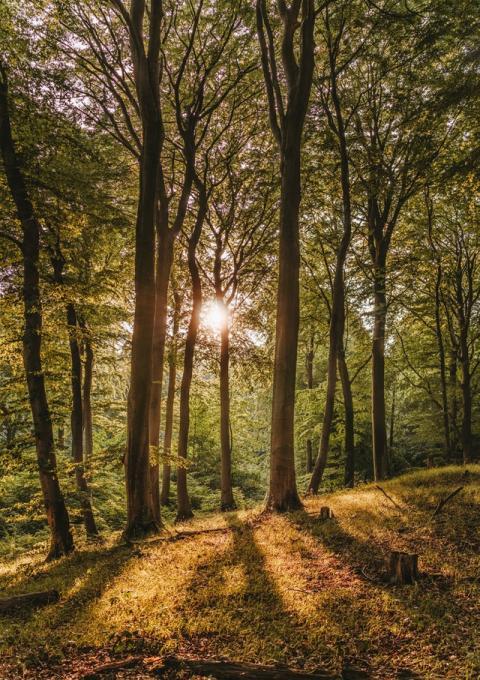 Les bienfaits de la forêt sur notre santé - Article du MouvementUP