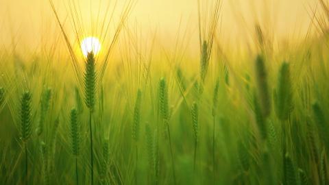 Une nouvelle donne agro-alimentaire - Article du Courrier