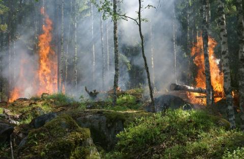 Crime d'écocide : vers une définition universelle pour l'intégrer aux côtés des crimes contre l'humanité - Article de Novethic