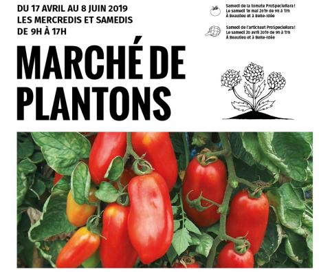 Catalogue 2019   Semences de Pays et Artichauts