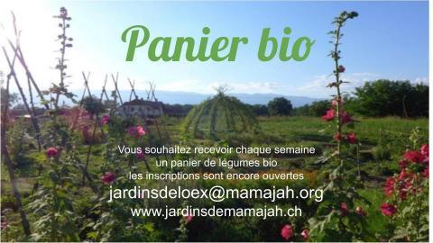 Les paniers bio des jardins de Mamajah sont de retour !